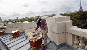 Les abelles a les ciutats